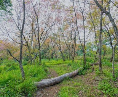 curso online de Cadeia de responsabilidade florestal CdR PEFC